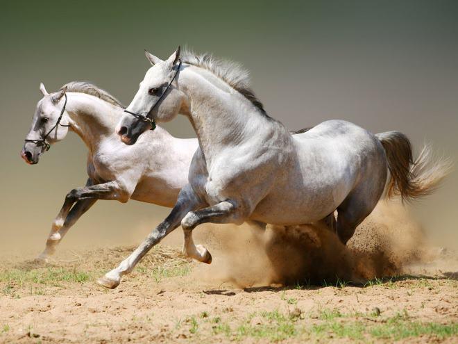Лошади в России пользуются особой ценностью