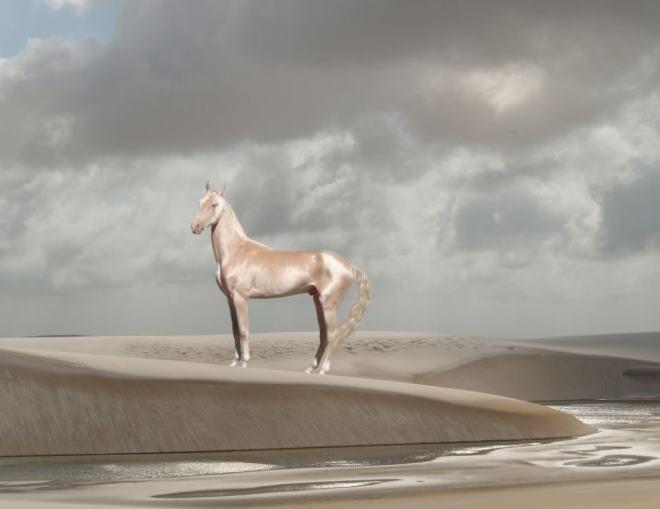 Изабелловая лошадь считается самой красивой