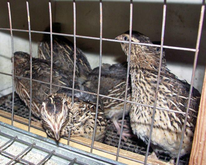 Птиц содержат в обычной клетке