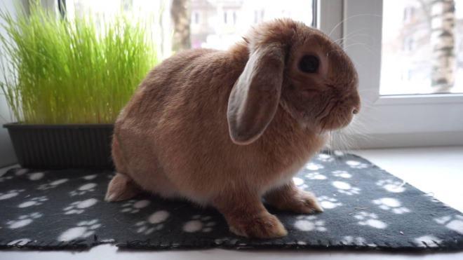 Если у вас есть другие животные, кролика покупать не стоит