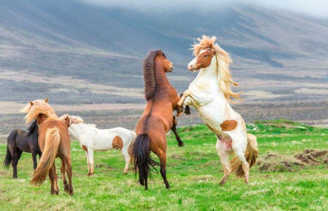 Игривость и активность животного - признак молодого возраста