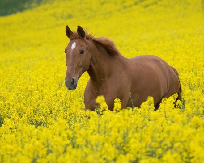 В дикой природе лошадь, очень редко, доживает до 15 лет