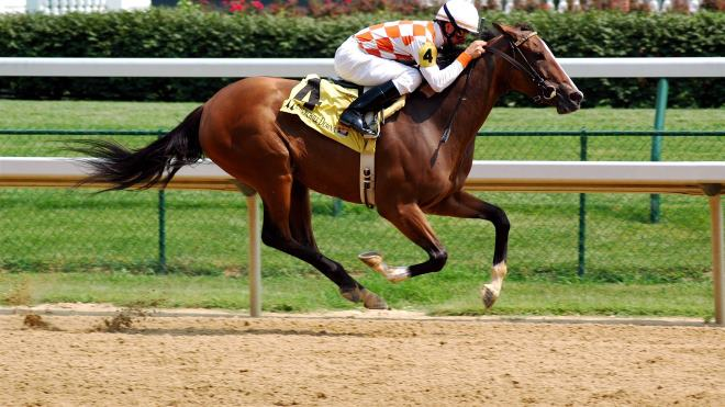 Лошади, которые принимают участие в соревнованиях, доживают до 20 лет