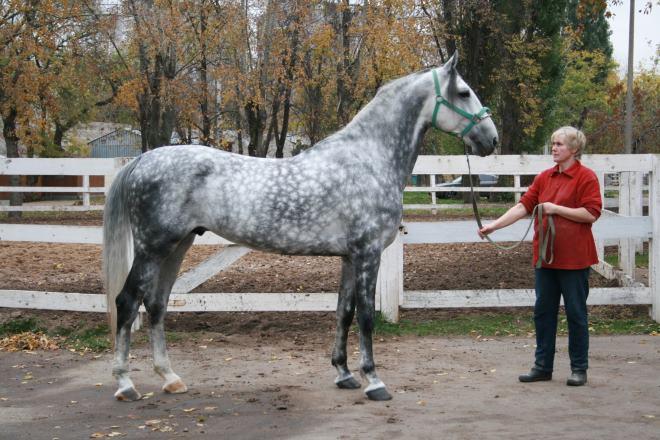 Инструкторы по езде отдают предпочтения лошадям в возрасте